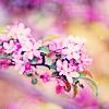 lilfish userpic