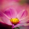 Stock: Flower