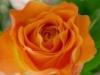 neira4 userpic