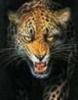 tigr - 2010