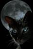 samarablackcat