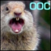 Victor Creed: OOC Squirrel