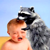 sunstealer: Raccoon