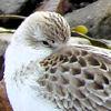 Gillian: shorebird