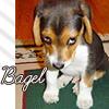 Lois: LS-Verse :: Baby Bagel