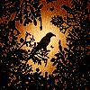autumn61 userpic