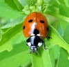 Gillian: Lady Beetle