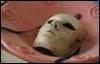 маска в миске