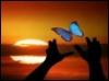 1blubutterfly userpic