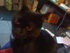 zip_the_cat userpic