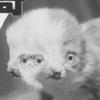 duo_the_cat userpic