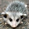 opossumnah userpic