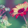 Yessica: flower