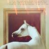 equine fever