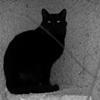 black_cat_6