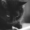 black_cat_7