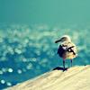 Stock: ocean bird