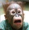 ucmopucm: глаза на лоб обезьяна