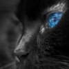 negro_gata userpic
