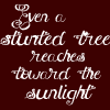 Even a stunted tree reaches toward the s