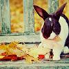 Stock: Autumn Bunny