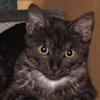 starmalachite: Dorothy On Scratchpad