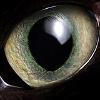 axia_85: Cat's Eye