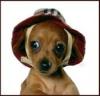 yagnok: наивный в шляпе