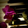 piano purple rose