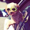 spiffy_shoelace userpic