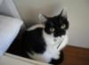 maxine_the_cat userpic