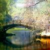 bridge by insane_graphix