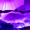 umbrella by fromthewind