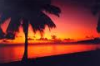 sunset & palm