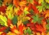 золотая пора, Осень