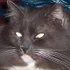 Demon Kitty