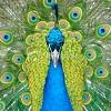 emilylime userpic