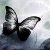 бабочка чб