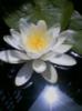 indigo_silence userpic