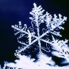 skaredykat: snowflake