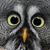 kranker_uhu userpic