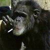 thesmokingchimp