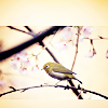 Alexandra: Stock - Bird