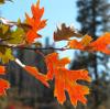 Seasonal: Leaves