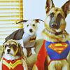 Suuuuper dogs!