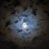 contradictionary: desc of darkness