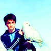 Alex: Harry and Hedwig