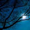 bleukittie: Winter night