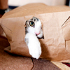 Cat Out the Bag