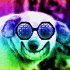acid_dog